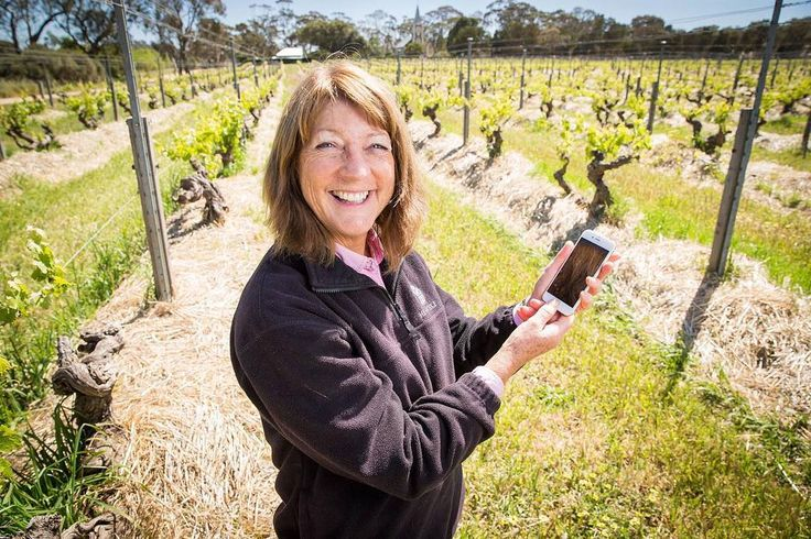 Visiting Barossa? Download the 'Boundary Rider' App. which places a virtual fence around some of the Barossa's most valuable vineyards as part of a pilot program launched to safeguard South Australia's $1.78 billion wine industry from pests, disease and weeds.  Pictured is Prue Henschke in the Hill of Grace vineyard.