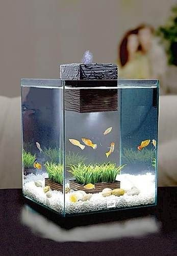 224 best images about feng shui on pinterest feng shui for Feng shui fish tank
