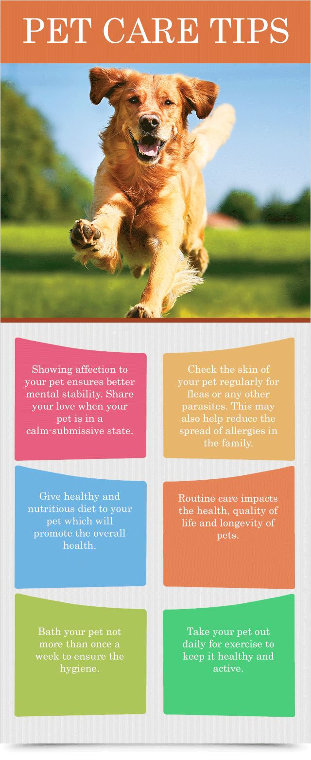 Pet Care Tips : Health Products For You