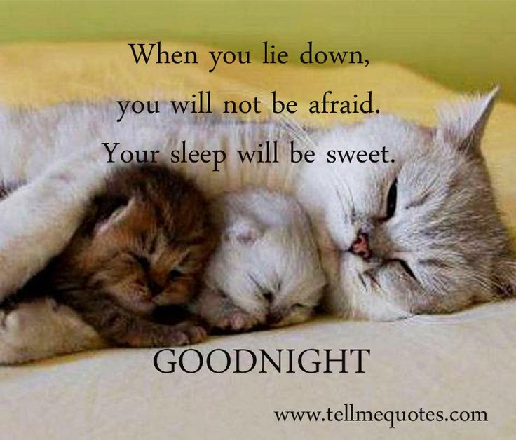 Good Night Messages | Good Night Wishes | Good Night SMS