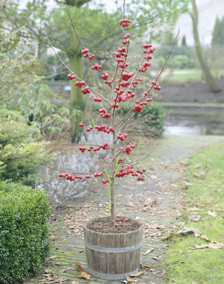 Junge Bäumen schneiden • Pflanzen Tipps & Tricks • 99Roots.com
