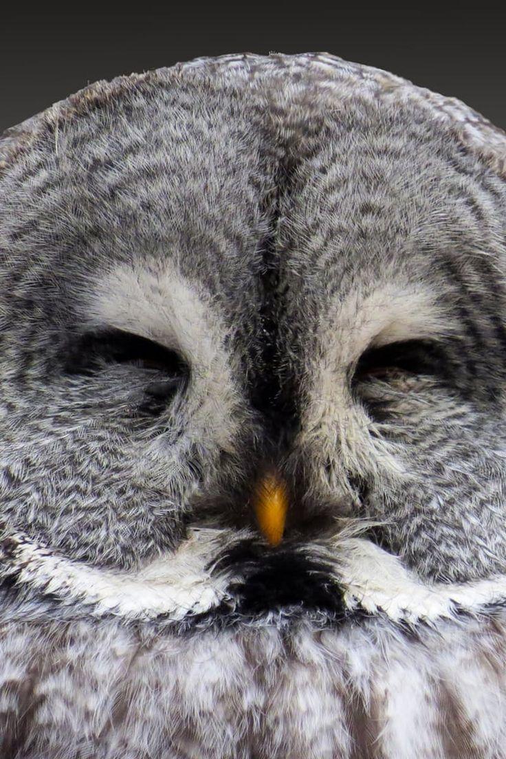 Grey Owl                                                                                                                                                                                 More