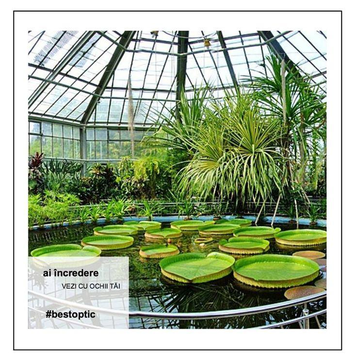 Grădina Botanică din Bucureşti poate fi o idee pentru o mini vacanță, răcoritoare, de o zi. Aer curat, multe locuri liniștite, locuri cu soare, locuri cu umbră, locuri cu flori, pajiști, conuri, dealuri și mini-păduri, cam ca la munte. Și toată distracția costă 5 lei pentru adulți, iar pentru copiii sub 5 ani e gratis.  #devazut #vacanta #bestoptic #romania