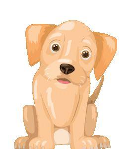 KIDON.CO granja de perros