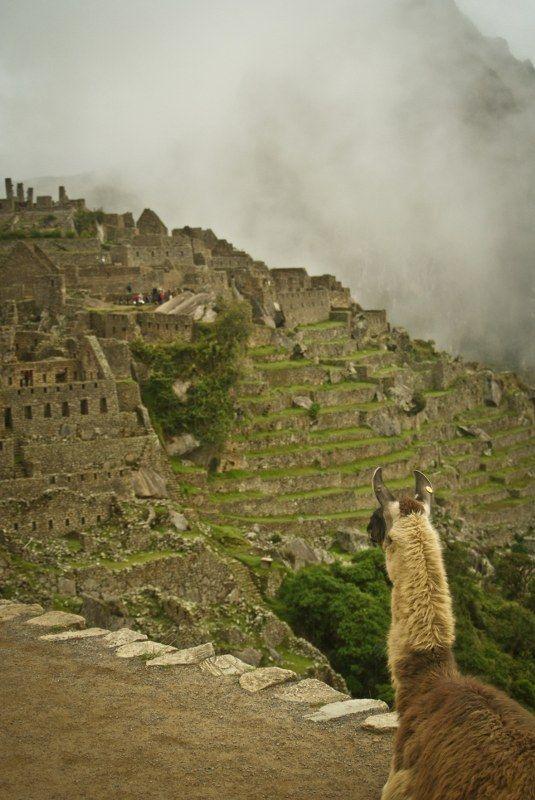 Osservando il  Machu Picchu