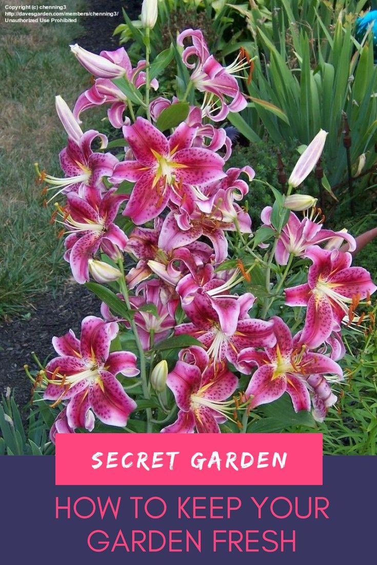 Garden Design Tips To Help You