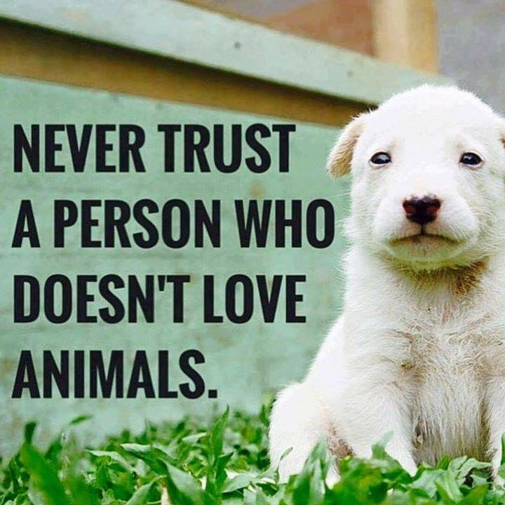 Never Trust A Person Who Doesn T Love Animals Dog Quotes Animals Cute Animals