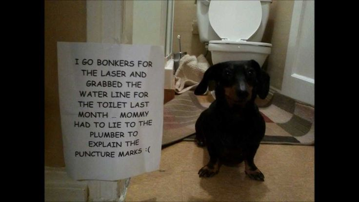 dog dachshunds dog shaming baby dogs weiner dogs water hose hot dogs