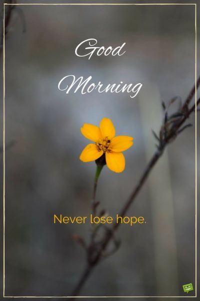 Good morning. Never lose hope.