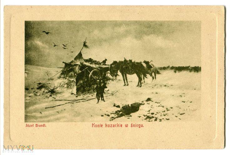 Konie kozackie w Śniegu