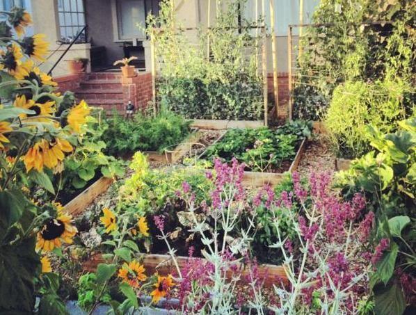 Így lehet 60 nap alatt gazos kertből konyhakert   Sokszínű Vidék - Ahol a jó élet lakik