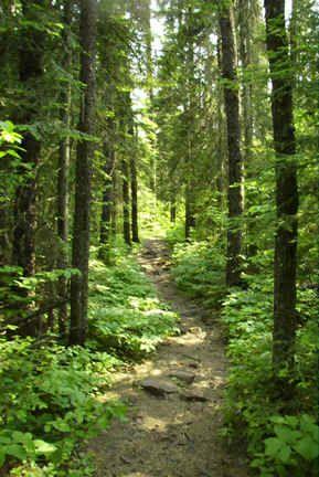 Eagle_Mt._Jackpine_trail_cond.jpg (289×432)