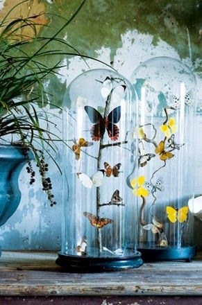 Glazen stolp tips