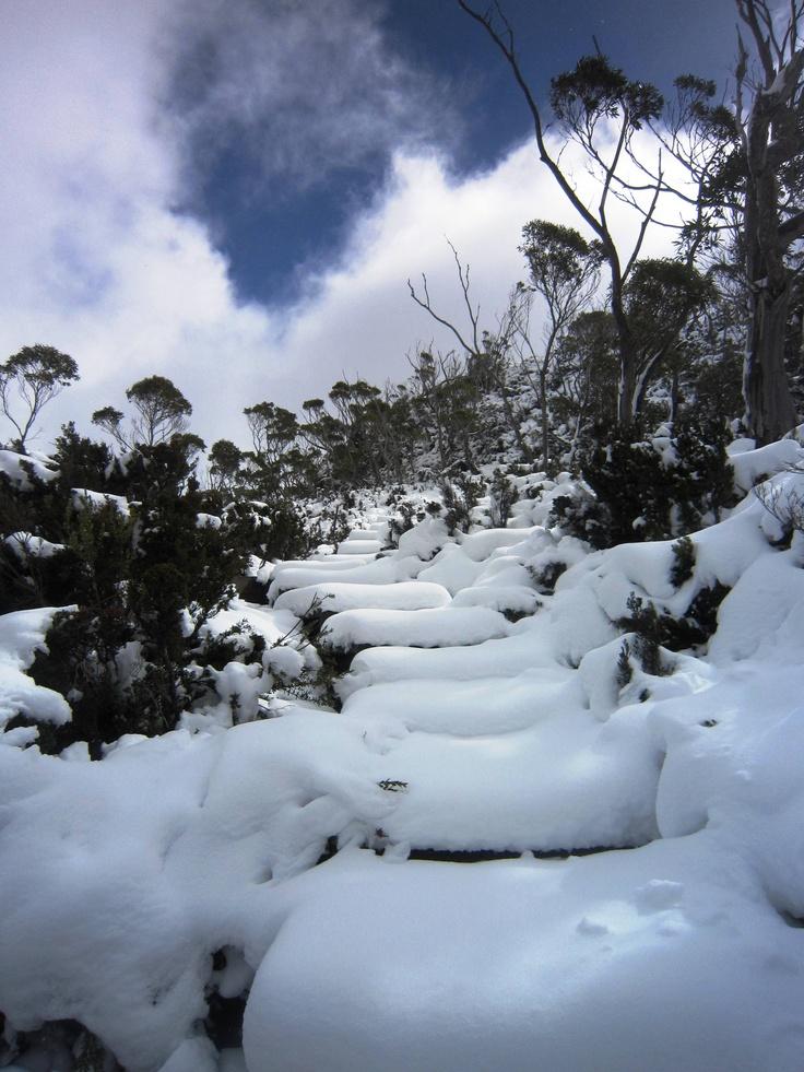 Cradle Mountain National Park, #Tasmania, #Australia. #travel.
