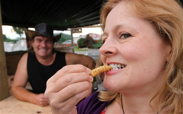 Live insects and griddled calves' brains.... just some of the delicacies to test the tastebuds at a New Zealand food fair.