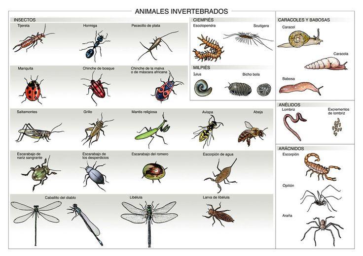 Infograf a de los animales invertebrados animales - Como ahuyentar los mosquitos ...