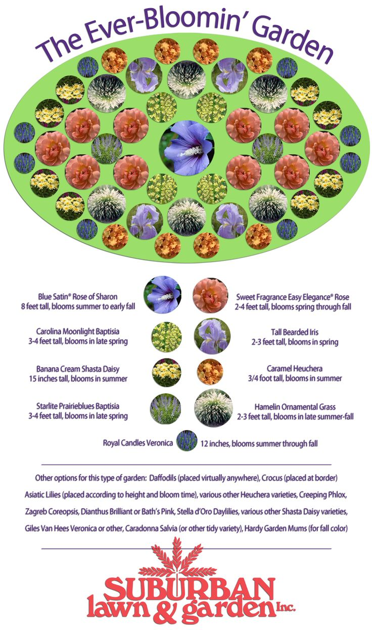 Best 25 flower garden layouts ideas on pinterest raised for Easy perennial garden plan