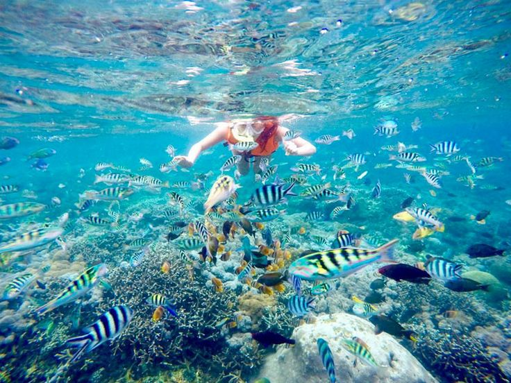 Beautiful Best Snorkeling Ideas On Pinterest Hawaii Holidays - The snorkeling guide to florida 10 spots for underwater exploring