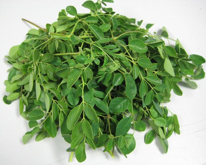 MORINGA LEAVES - The Ultimate Super Food - 4 Times the Potassium of Bananas - 9 Times the Iron of Spinach - 4 Times the Fiber of Oats - 14 Times the Calcium of Milk - 2 Times the Vitamin A of Carrots - 2 Times the Protein of Yogurt.