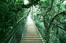 Tree Top Walk - Lamington National Park