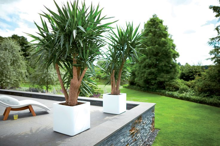Drzewa na balkonie? To możliwe! | Inspirowani Naturą | design flower pot by elho at terraform.pl