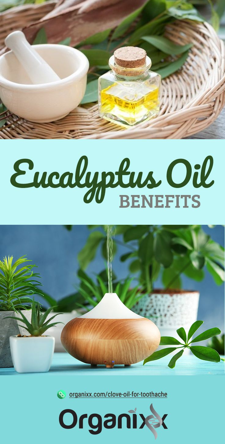 EUCALYPTUS OIL: You'd likely recognize the scent of this highly aromatic essential oil. Discover the many eucalyptus oil benefits for your health and read on for some great information by clicking on the graphic above! || Natural medicine | Respiratory health | Anti-inflammatory essential oils | essential oil remedy | eucalyptus oil health benefits || essential oil health benefits | benefits of essential oils | #organixx #essentialoiltip #essentialoils