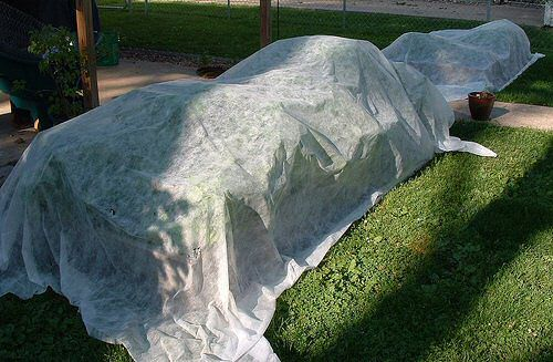 Protecting Plants From Frost Damage: Frost Covers And Plant Protectors