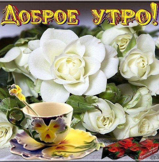 Красивые картинки с цветами и надписями с добрым утром, спокойной ночи