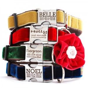 Love these @shopmimigreen dog collars. Allie Cat looks so cute her Mi Corazon oilcloth collar. I'm thinking maybe velvet for the holidays.
