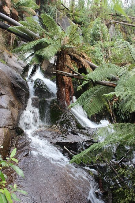 Melbourne WeekendNotes - Lady Talbot Drive Waterfalls and Beech Forests - Marysville. Lovely walk to do. www.marysvilletourism.com/visit-marysville-apps