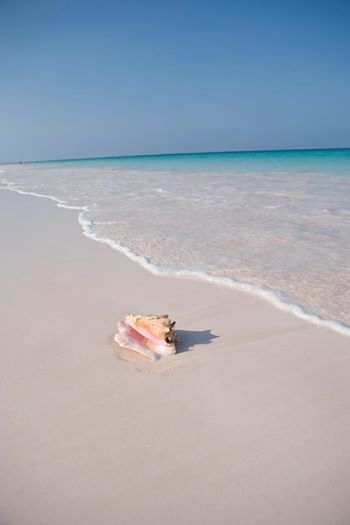 42 best images about harbour island on pinterest for Pink sands beach in harbour islands