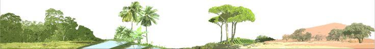 Pl@ntNet - identification des plantes en ligne