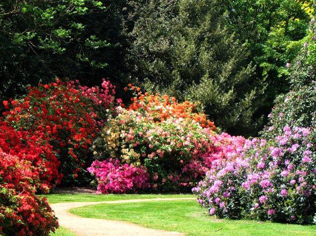листопадные и вечнозеленые кустарники