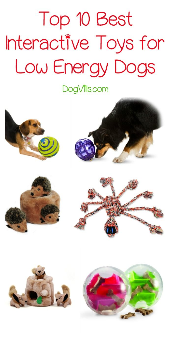 Top 10 Best Interactive Toys For Low Energy Dogs Low Energy Dogs