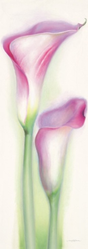 Calla Lilly 1