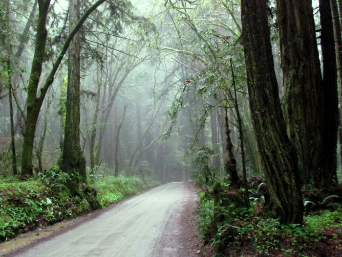 15. The Forest of Nisene Marks State Park - Aptos/Capitola