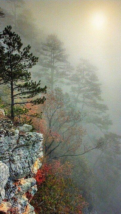 Autumn morning mist.