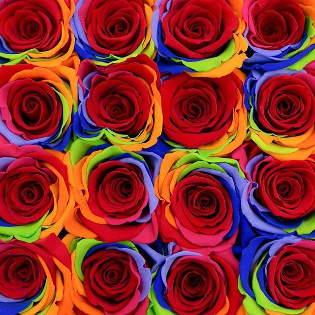 'Celebrating #NationalRoseDay with client Sony Pictures at #LAPride2017 . . #RHEG #RHeventgroup #eventplanning #eventproducer #events #creative #eventdecor #Sony #SonyPictures #gaypride #lapride #happypridemonth #lgbtq #lgbt #gay #weho #westhollywood #rainbow #shareyourpride #experiential #film #ownyourpride #millionroses #flowers #roses #rainbow #corporate #eventplanner #eventprofs' by @russellharriseventgroup. What do you think about this one? @imaginative_events1 @redblissdesign…