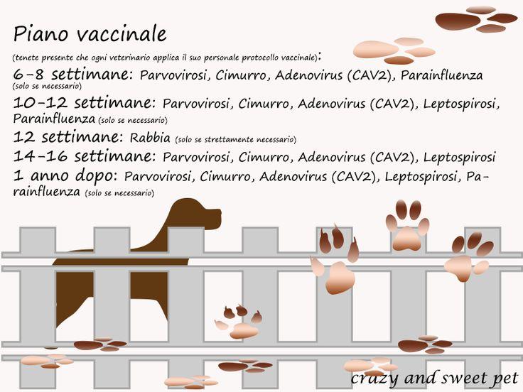 Crazy and Sweet Pets: A che età si deve fare la prima vaccinazione?