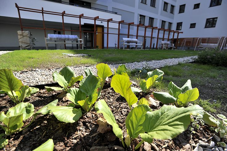 zieleń na osiedlu http://www.budimex-nieruchomosci.pl/warszawa-osiedle-goclawska-2/