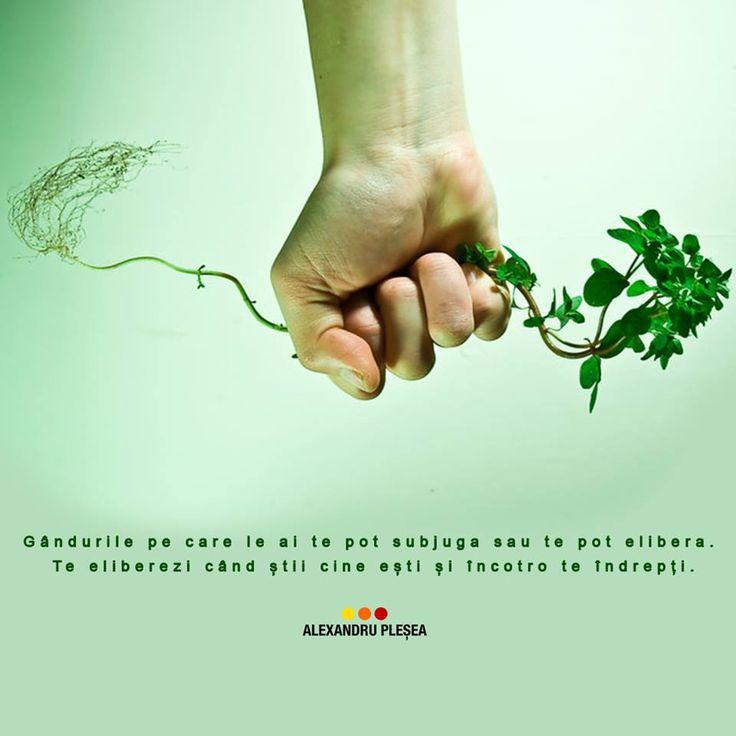 """Evoluția începe când știi cine ești și încotro te îndrepți. Cand îți transformi mintea, spui """"la revedere"""" tuturor problemelor. #haiperacheta"""