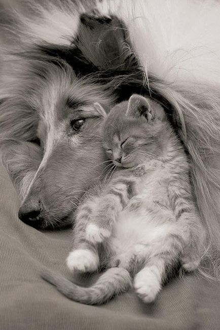 Dog and cat❤❤❤