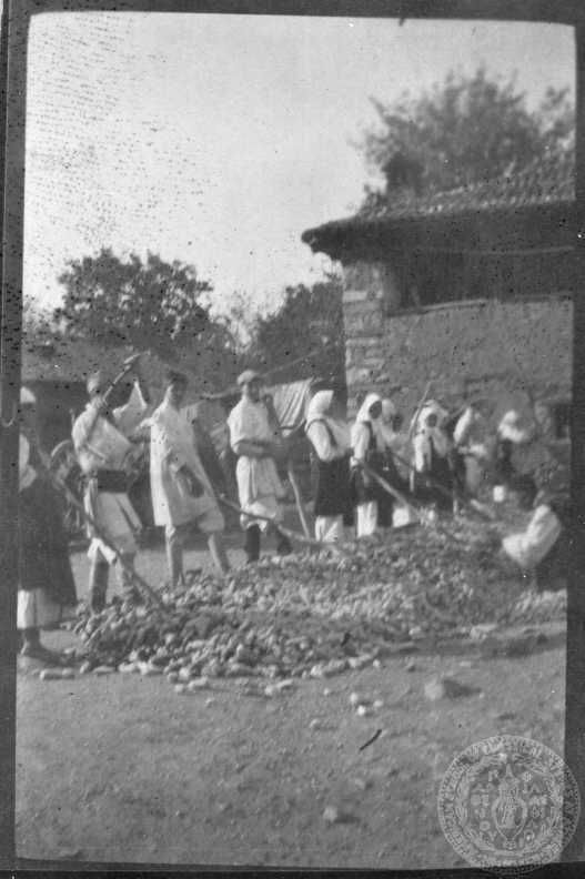 Α΄ Παγκόσμιος Πόλεμος. Σεπτέμβριος 1917 Μέτωπο Μακεδονίας. Αγροτικές εργασίες. Βελούζινα, Μακεδονία