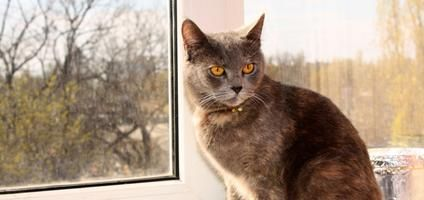 7 Tips for Making Your Outdoor Cat an Indoor Cat | Catster
