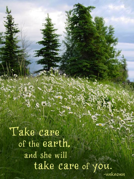 1000 Images About Nature Quotes On Pinterest Walt