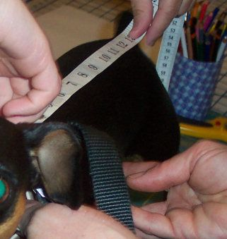 how to measure a dog for clothes, making doggie costumes, sewing for dogs, dog coats, dog size