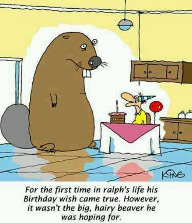 Humor #haha #beaver #funny #birthday | Birthday cards ...