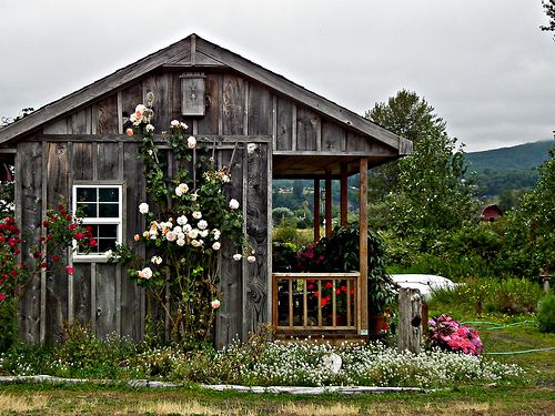 fragrantBeautiful Flower, Tiny House, Mountain, Climbing Rose, Gardens, Dreams Cottages, Little Cottages, Logs Cabin, Country