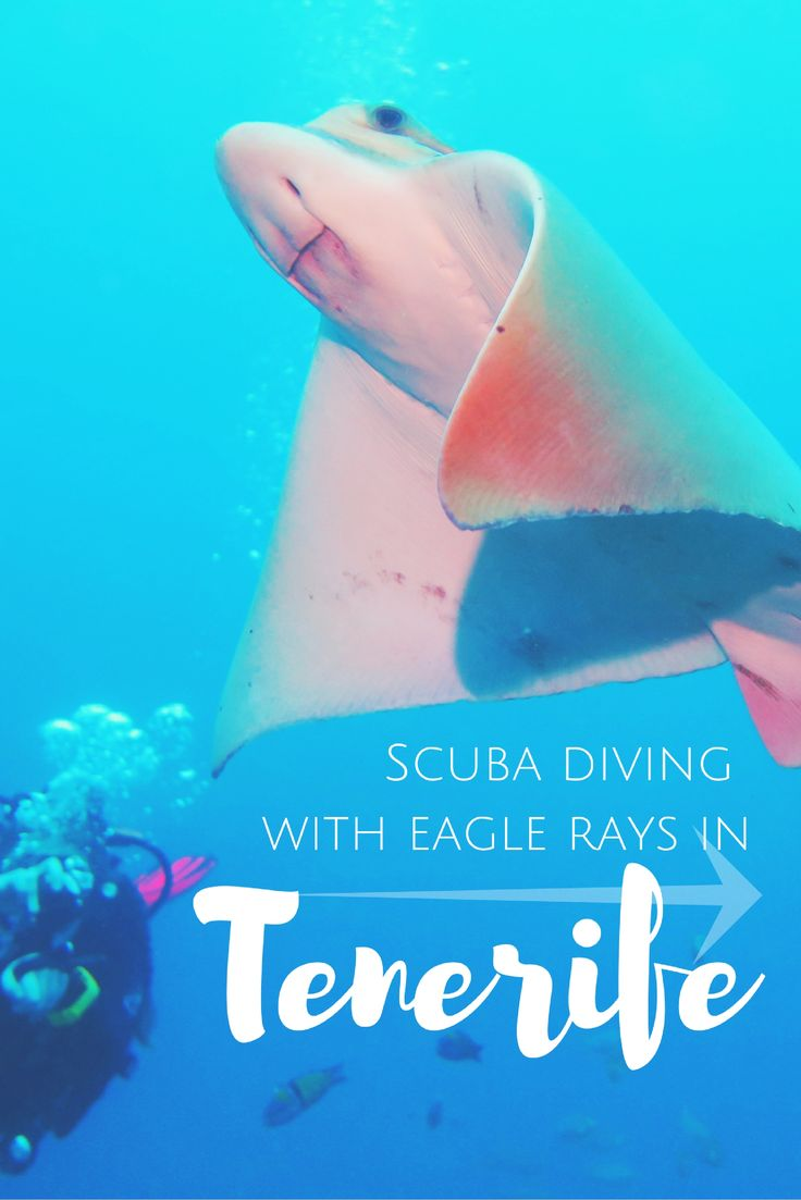 Scuba diving with Eagle Rays in Tenerife, Canary Islands, Spain - World Adventure Divers – Read more on https://worldadventuredivers.com/2016/10/17/scuba-diving-with-eagle-rays-in-tenerife-spain/
