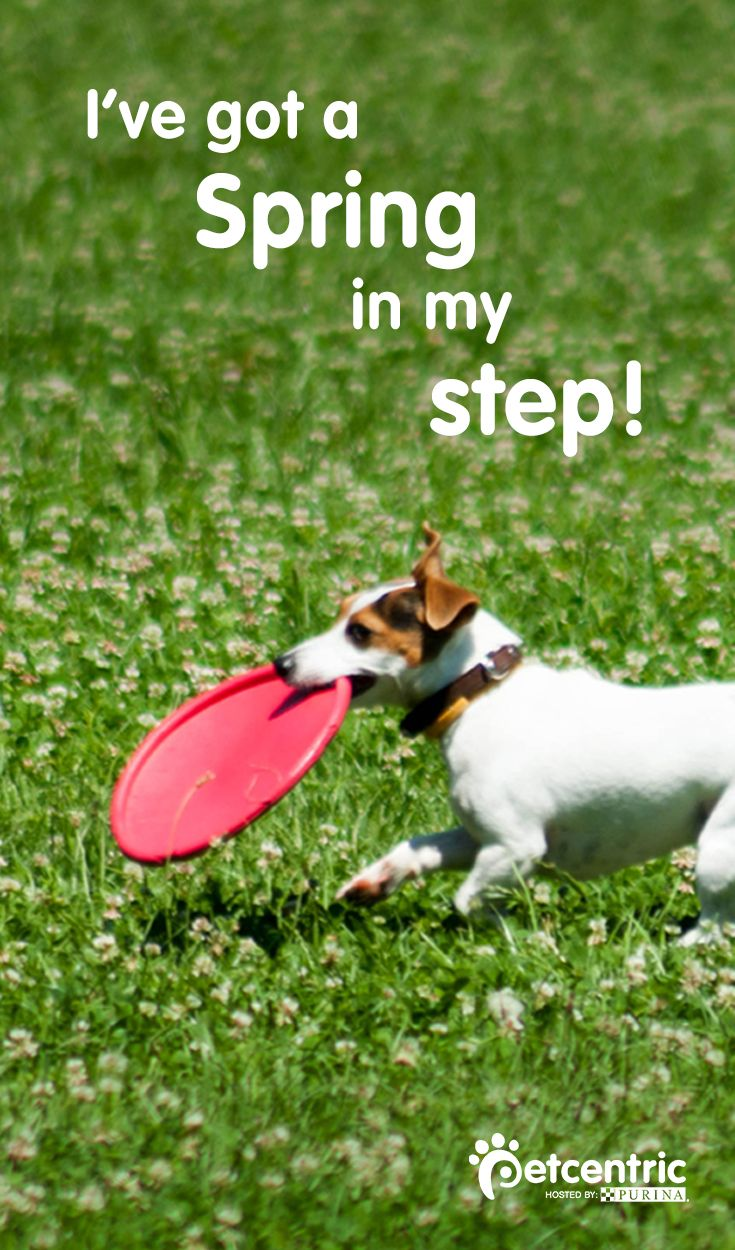 To celebrate Spring, play some fun outdoor activities with your dog like flying disc or hiking! Visit Petcentric.com for more Spring ideas.